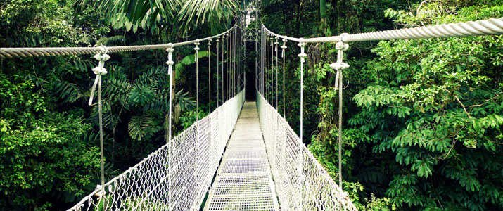 Arenal Hanging Bridges Ponts Jungle