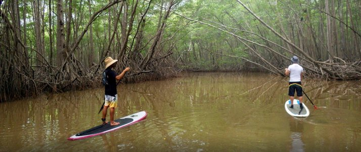 Pargos Adventures - Stand-Up Paddle mangrove