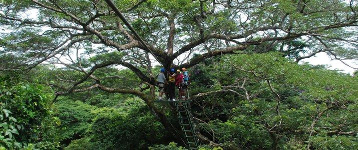 Pinilla Canopy Tour - Plateforme et Cimes