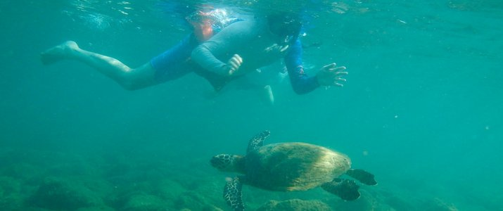 Snorkeling pacifique costa rica dominical tortue marino ballena