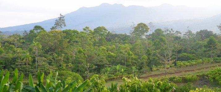 La Anita Rainforest Lodge Chocolate Tour - Plantation
