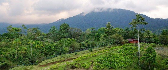La Anita Rainforest Lodge Chocolate Tour - Rancho et Plantation