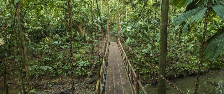 La Ceiba Bosque Primario Tours (Centro de Rescate Jaguar) - Pont Suspendu jungle foret primaire