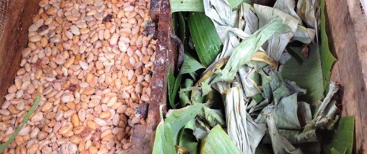 CariBeans - Préparations et matières premières