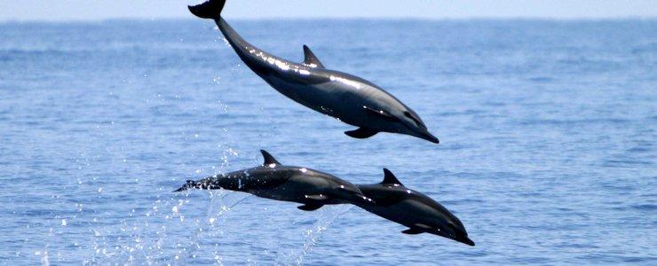 The Divine Dophin sauts de dauphin océan bébé