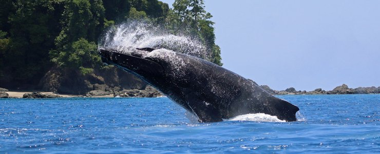 The Divine Dophin saut de baleine ocean terre jungle