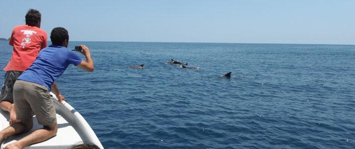 CR snorkeling tours 1 Alt observation mer