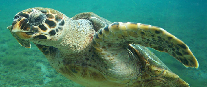 CR snorkeling tours 4 Alt tortue