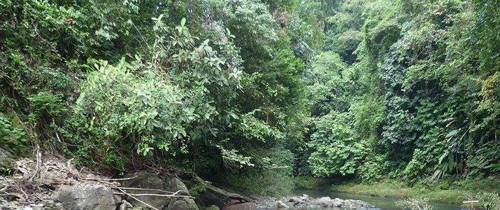 Pacheco - The Floating Tour Osa Corcovado Bahia Drake Bay Jungle RIvière