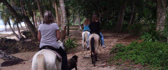 The Prancing Pony Caraïbes Sud Punta Uva Balade Cheval Jungle plage verdure
