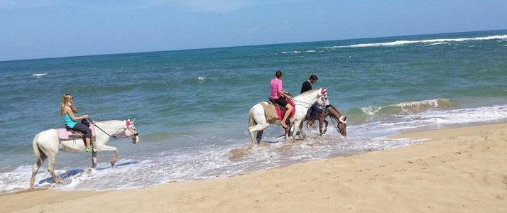 The Prancing Pony Caraïbes Sud Punta Uva Baignade à Cheval Plage Ocean