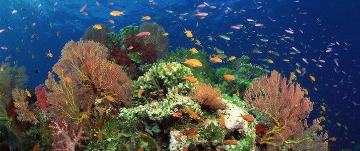 Kenry Tours Caraïbes Sud Cahuita Parc Jungle - Snorkeling