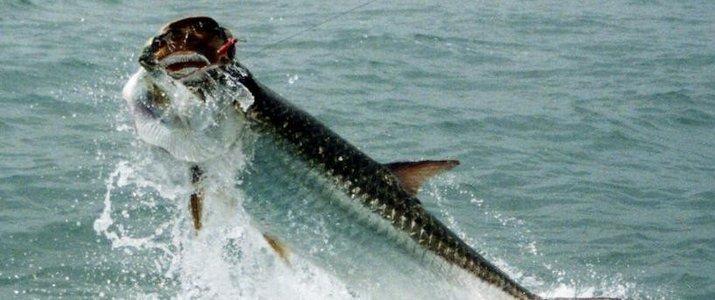 Kenry Tours Caraïbes Sud Cahuita Parc Jungle - Pêche Sportive