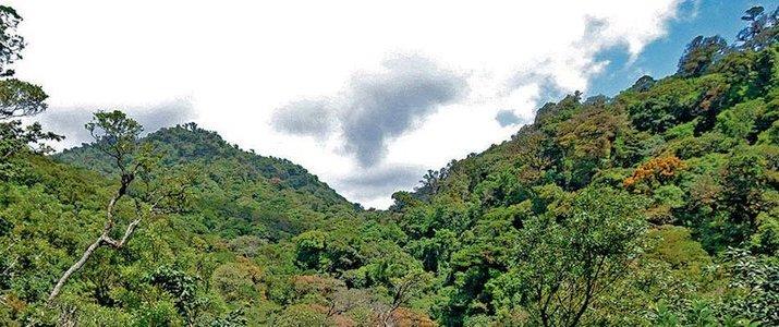 Curi-Cancha Reserve Monteverde Santa Elena Forêt de Nuages Flore