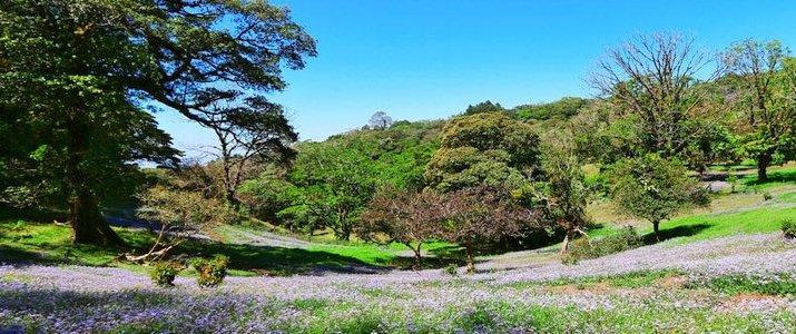 Curi-Cancha Reserve Monteverde Santa Elena Forêt de Nuages Fleurs Prairie Flore