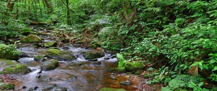 Curi-Cancha Reserve Monteverde Santa Elena Forêt de Nuages Cours d'eau ruisseau bosquet Flore