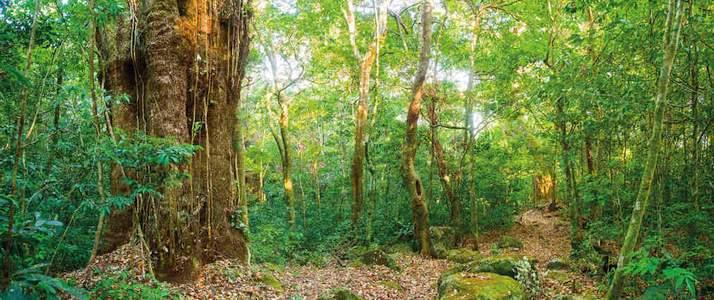 Rio Negro Rincon de la Vieja Hacienda Guachipelin Adventure Tours Volcan Forêt