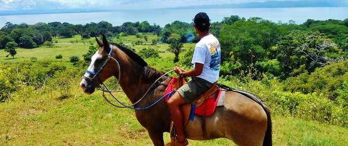 cheval, nature, mer, vue, nature, corcovado, osa, puerto Jimenez, activité, costa rica