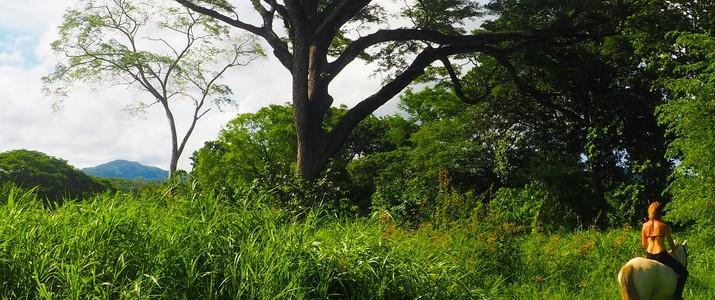 Horse Jungle balade cheval forêt