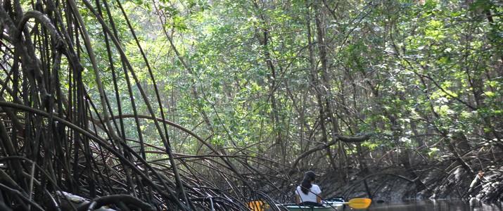 Aventuras Tropicales kayak mangrove