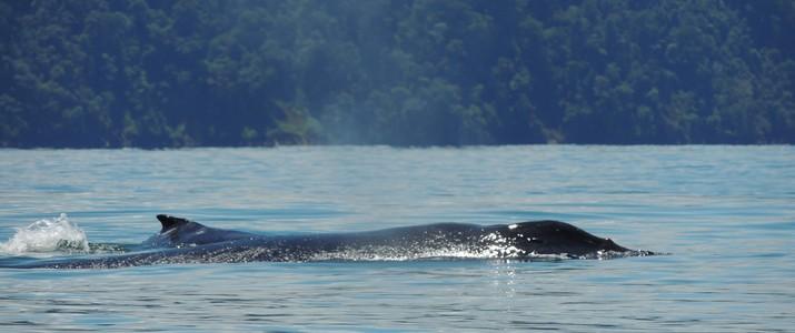 Aventuras Tropicales kayak baleine