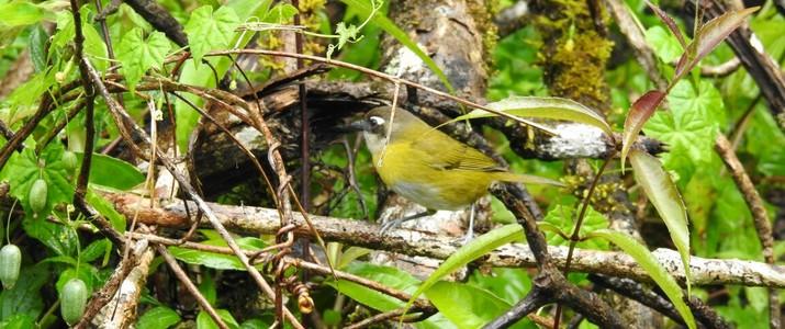 Ficus Trails Oiseaux 1