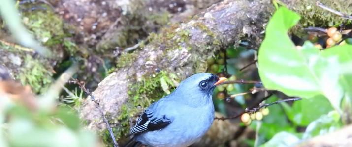 Ficus Trails Oiseaux 2