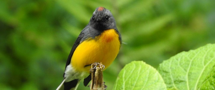 Ficus Trails Oiseaux 3