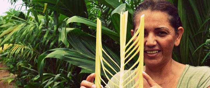 Palmitour guide