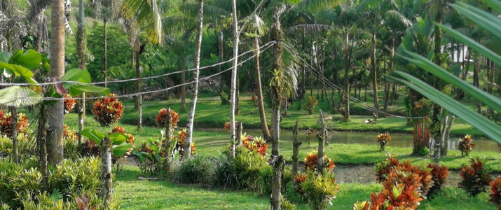 Finca Sura Puerto Viejo de Sarapiqui paysage