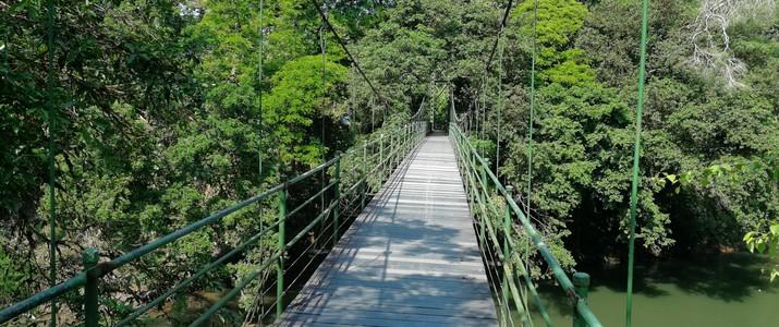 Réserve biologique de La Selva Puerto Viejo de Sarapiqui pont suspendu