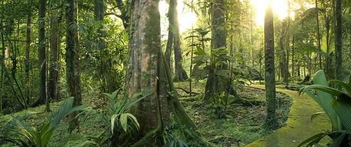 Réserve biologique de La Selva Puerto Viejo de Sarapiqui jungle