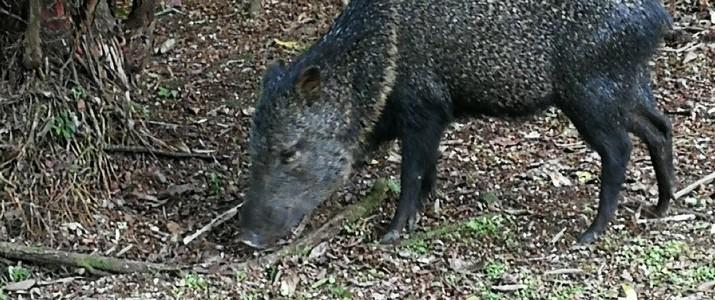 Réserve biologique de La Selva Puerto Viejo de Sarapiqui animal