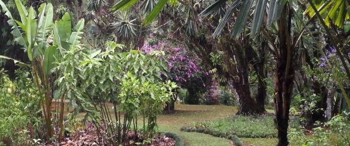 Jardin botanique Wilson station biologique las cruces san vito plantes