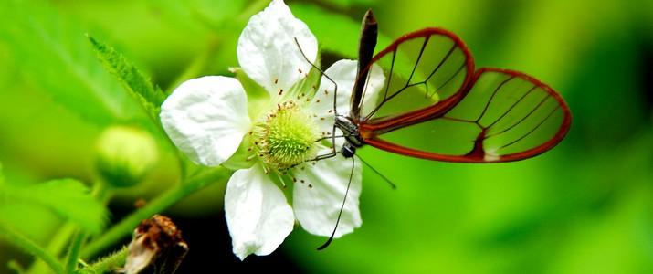 Jardin botanique Wilson station biologique las cruces san vito papillon