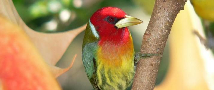Batsu Garden San Gerardo de Dota oiseau