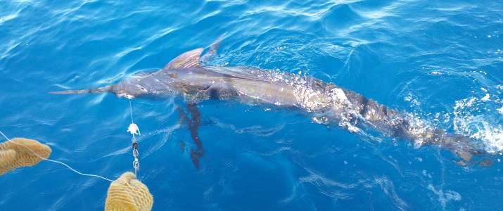 Buena Vista Sporfishing poisson - Samara - Nicoya