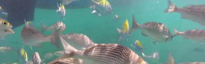 Cabo Blanco Travellers - Montezuma - Nicoya - snorkelling