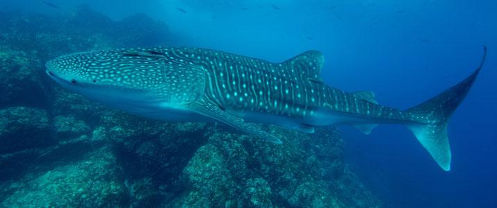 Rich Coast Diving baleine