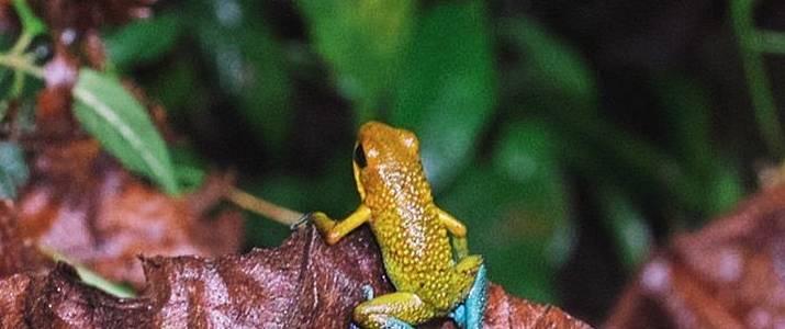 Rainmaker - frog