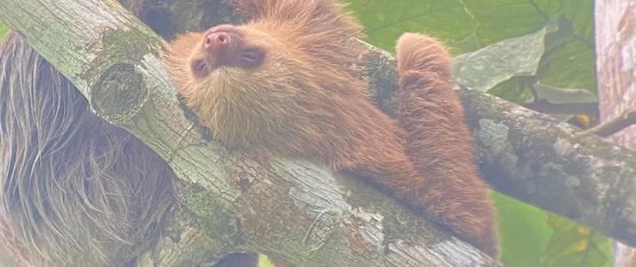 Sloth Territory Sloth