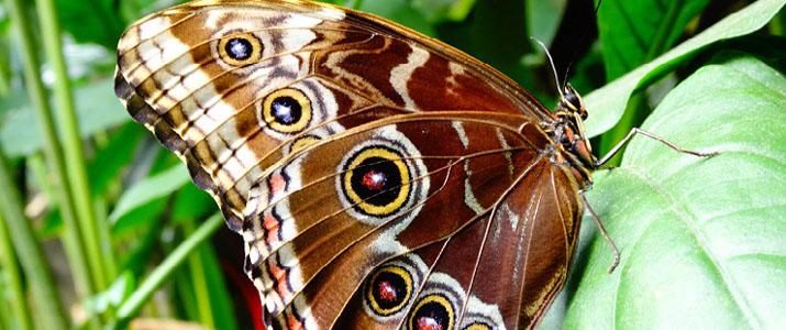 Cabo Blanco Butterfly Farm papillon