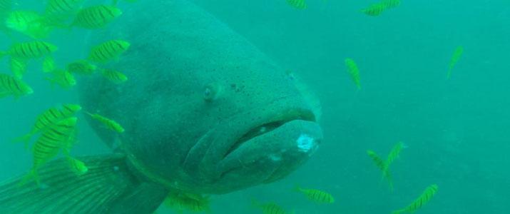 Drake Divers 1 Alt poisson