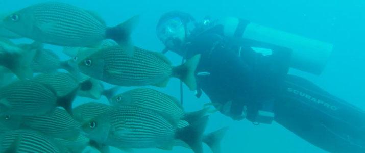 Drake Divers 3 Alt plongee