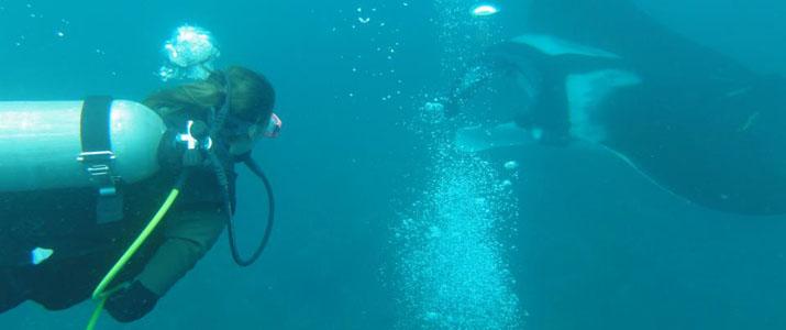 Drake Divers 4 Alt raie