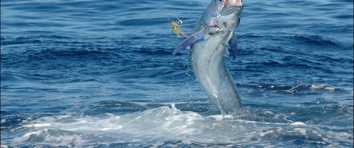 Tamarindo Sport Fishing espadon pêche