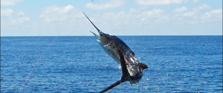 Tamarindo Sport Fishing pêche espadon