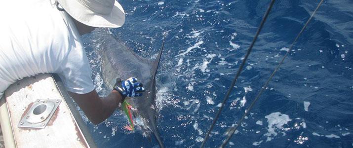 Tamarindo Sport Fishing pêche bateau