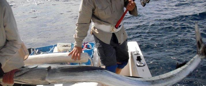 Alt 3 pêche poisson mer espadon