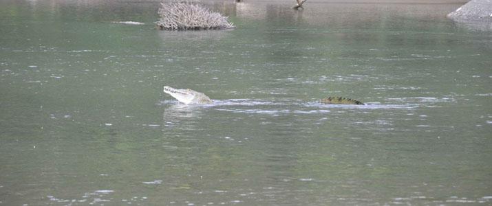 Osa Services 1 Alt crocodile